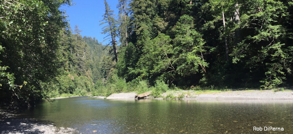 Looking up Redwood Creek from the bank, with trees on the far bak and the river curving to the right