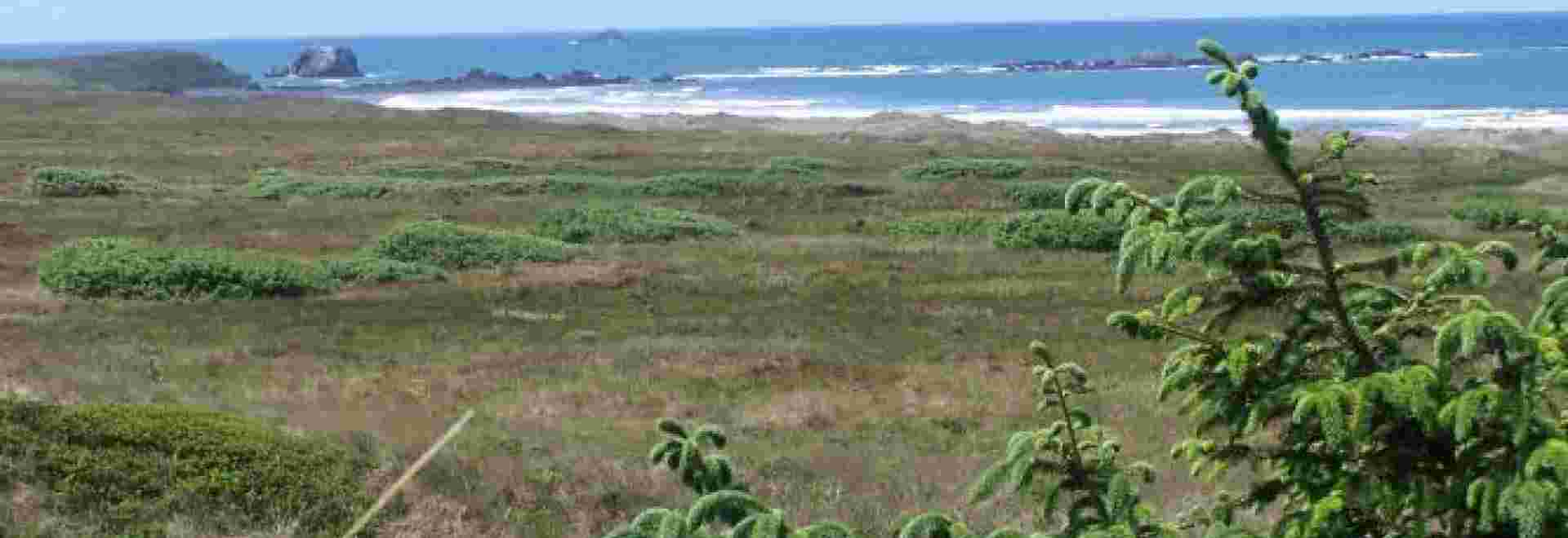 Coastal Wetlands of Tolowa Dunes State Park