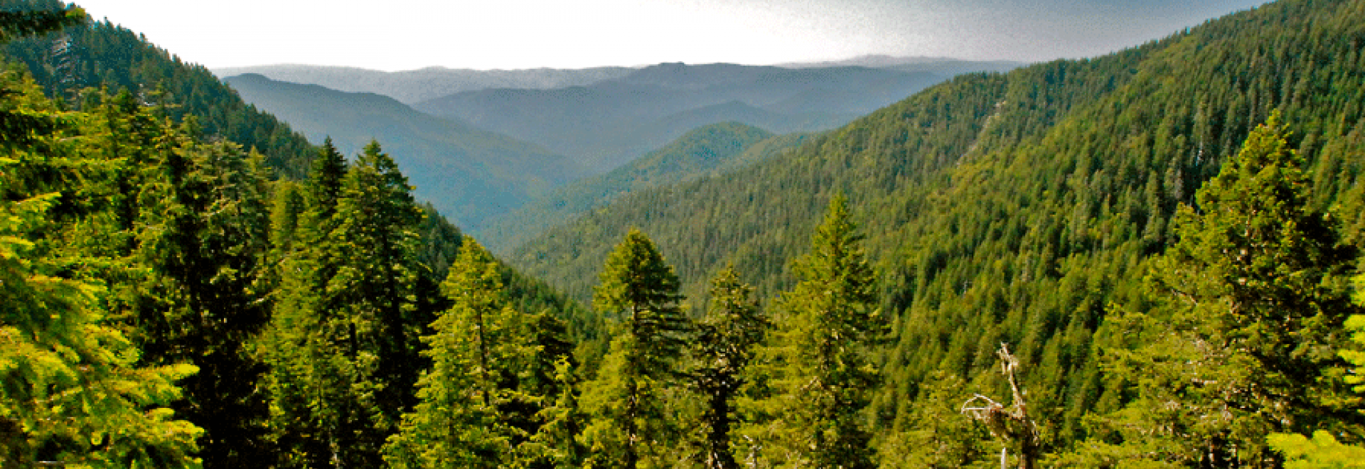 View down the watershed of the Smith River National Recreation Area