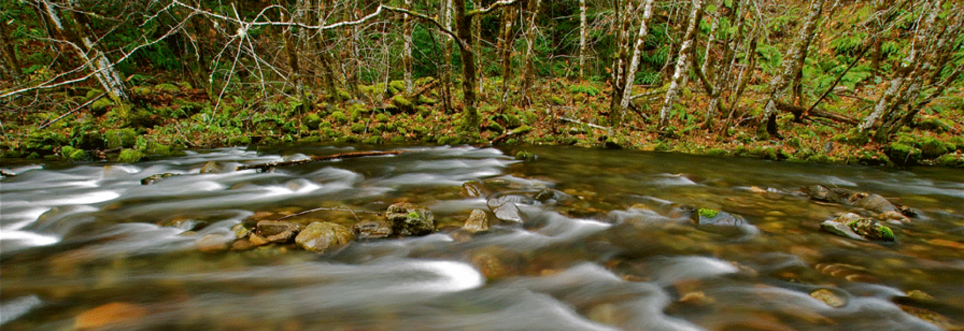 The Smith River flowing gently over rocks
