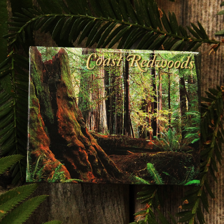 Old Growth Forest Magnet