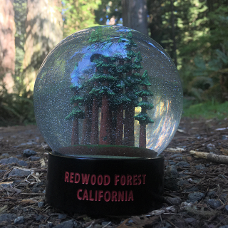 Redwood Forest Fog Globe