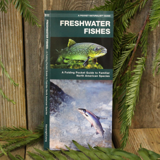 Freshwater Fishes Guide