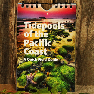 Tidepools of the Pacific Coast Waterproof Pocket Guide